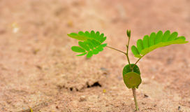 single-green-plant-desert-close-up-43526626